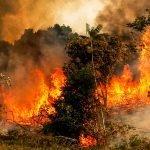 El Amazonas se quema y te contamos por qué